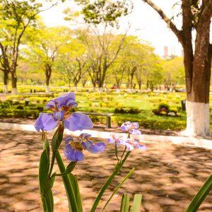 Jardins inspirados nos cemitérios parque americanos.