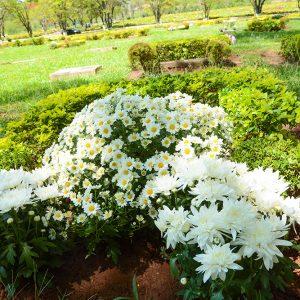 Amplo espaço florido