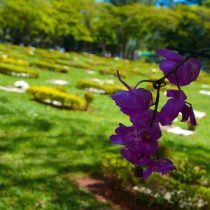 Vista Geral do Cemitério Parque Jardim do Ypê