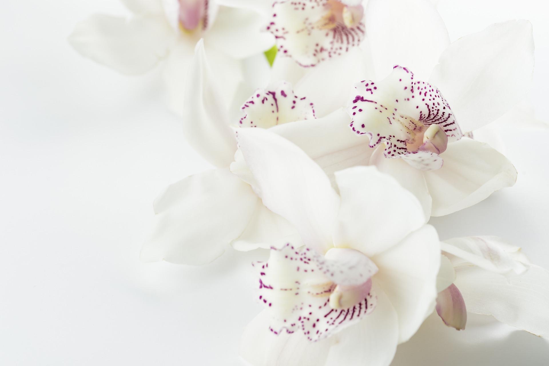 As orquídeas vão tomar a Estação!
