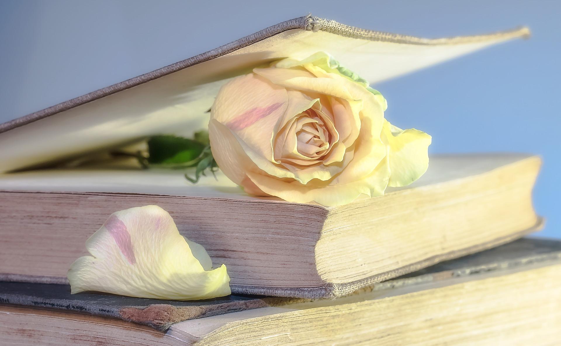 5 livros que te ajudarão a lidar com o luto