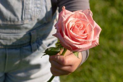 rose-3415370_1920