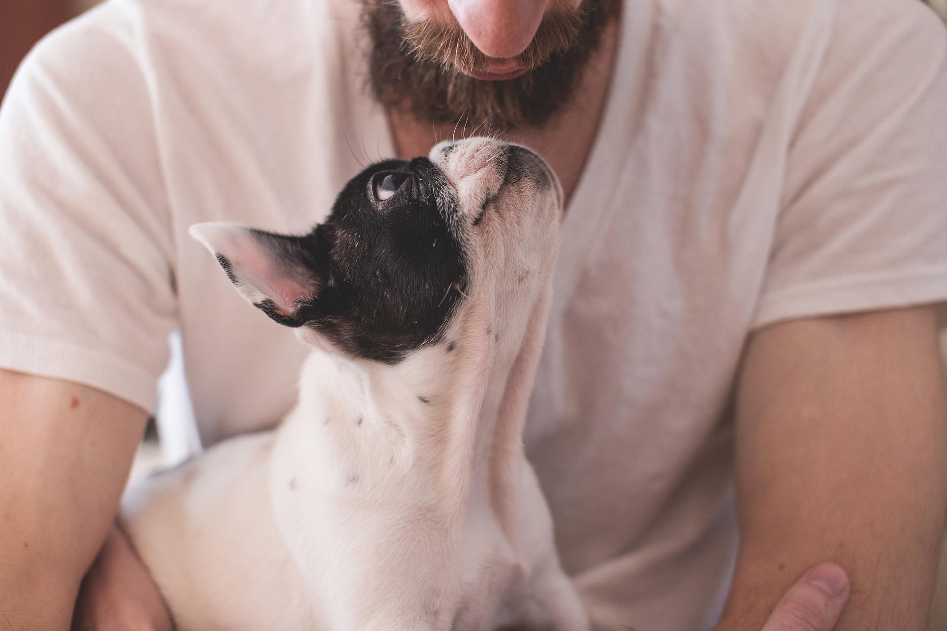 Pet Terapia: saiba o que faz uma cão terapeuta em Bauru