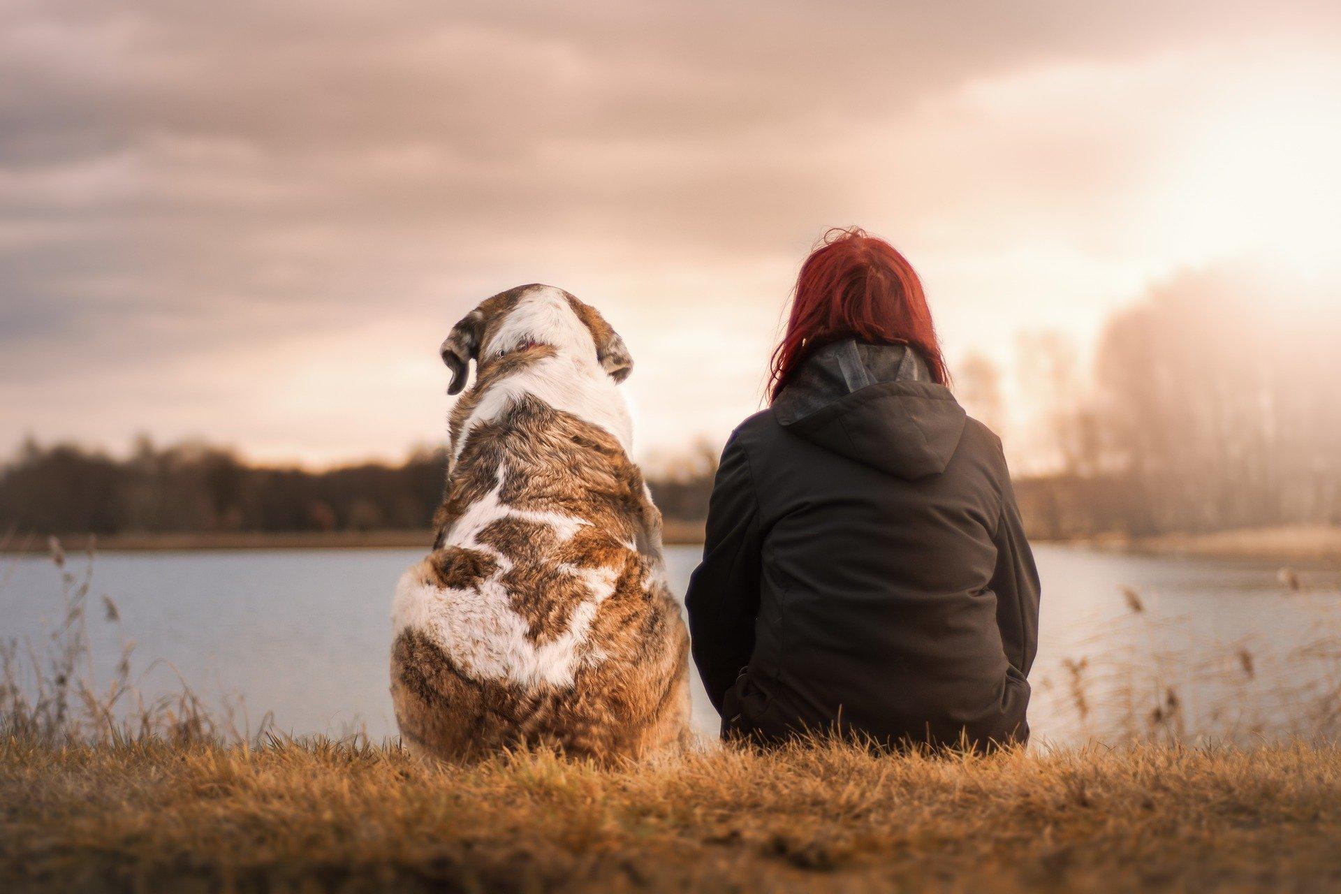 Luto pela perda de morte de animais de estimação