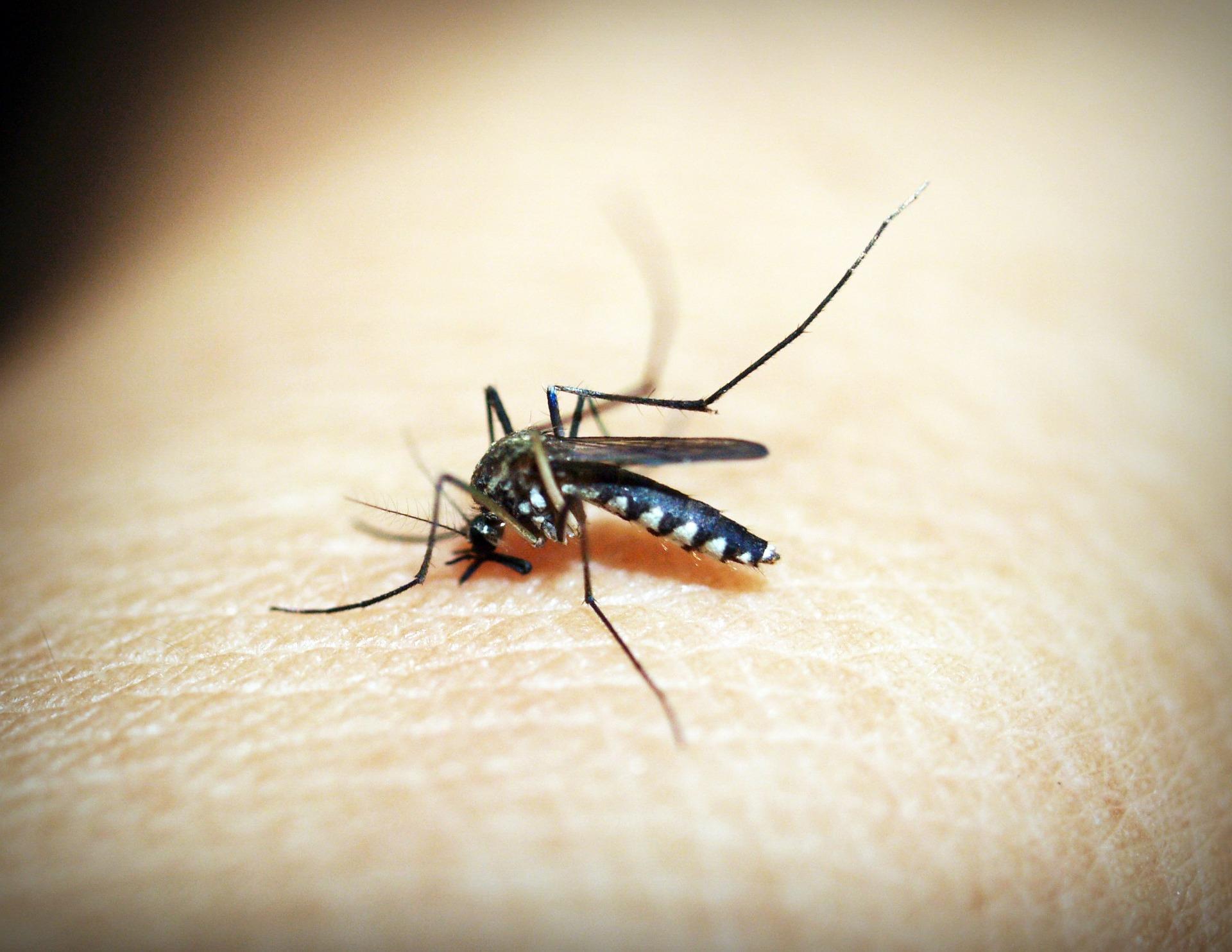 Sequelas da dengue podem durar anos