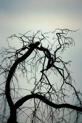 tree-5262953_1920