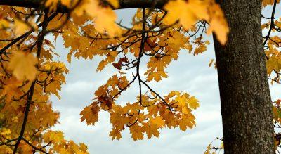 leaves-5667719_1920