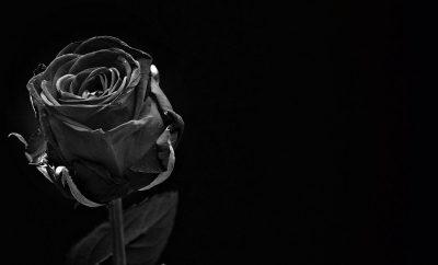 rose-1460773_1920